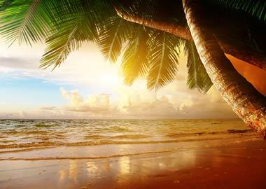 Strand med palme i solnedgangen