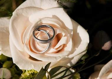 Vielsesringe der ligger i en lyserød rose