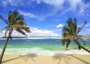 Palmer på eksotisk strand