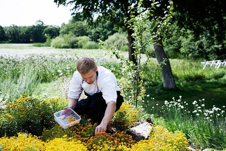 mand plukker blomster
